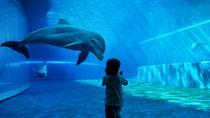 東京の体験型のイベントがある水族館。子どもの喜ぶ顔を見よう
