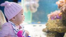 関西の水族館。赤ちゃん連れにおすすめのスポット