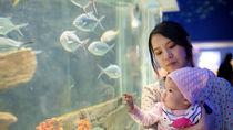 北陸の水族館で赤ちゃん連れで楽しめるスポット。ママ目線で選んだおすすめを紹介