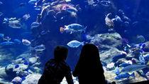 北陸の展示が魅力的な水族館。家族で海の生き物に会いに行こう