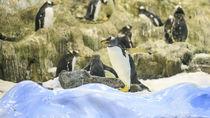 北陸周辺で冬のお出かけにおすすめの水族館は。親子で楽しめるイベントなど