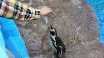 九州の餌やりプログラムがある水族館に、家族みんなでお出かけしよう