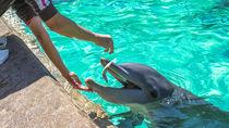 九州のえさやりプログラムがある水族館について。子どもが喜ぶ水族館は