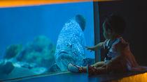 日本国内の赤ちゃん連れにおすすめの水族館は。ママ目線で選んだ水族館