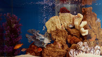 日本国内のさまざまな種類の生き物に出会える水族館を、親子で楽しもう