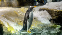 日本で正月に営業している水族館とは。親子で楽しめる水族館をご紹介
