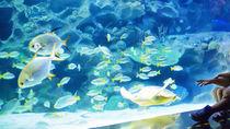日本国内の展示が楽しめる水族館に、家族みんなで出かけよう