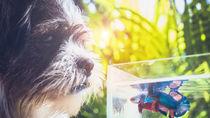 日本国内のペットが同伴できる水族館。子どもとペットと楽しもう
