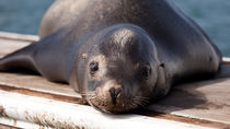 日本国内で冬のお出かけにおすすめの水族館。寒い日もたくさん楽しもう