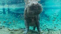 日本国内の動物も飼育している水族館で海の生き物も動物も楽しもう