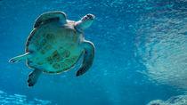 日本で元旦から営業している水族館。家族で冬のおでかけを楽しもう