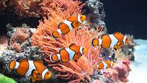日本各地の水族館はいつから営業している?営業時間やイベントなど、施設情報を調査。