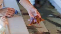 四国の水族館。海の生き物とのふれあい体験で海の生き物を間近で見てみよう