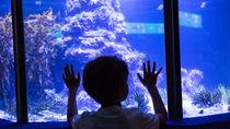 関西の体験プログラムがある水族館。家族みんなで海の生き物にふれ合おう