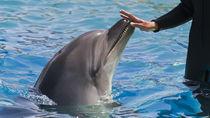 関西の水族館。海の生き物に触れる体験が楽しめる、子連れにおすすめのスポット