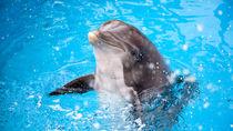 関西の水族館の入館料金はいくら?施設情報やイベント情報と併せてご紹介