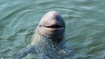 日本全国の生き物に触れる体験ができる水族館はここ。ママ目線で選ぶおすすめは