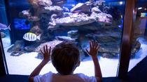 関西の水族館へ。さまざまな種類の海の生き物に会いに行こう
