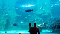 四国周辺の子ども連れに優しい水族館をランキングで紹介