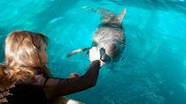 九州の水族館。家族みんなで海の生き物に触れる体験を楽しもう