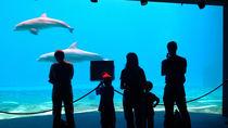 四国周辺でさまざまなイベントが楽しめる水族館。季節ごとのイベントを楽しんでみよう
