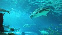 九州の展示が魅力的な水族館。家族で海の生き物に会いに行こう
