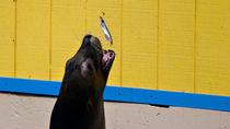 関東のえさやりプログラムがある水族館で子どもとたくさん楽しもう