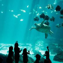 関東の水族館。寒い冬でも家族でゆっくりおでかけを楽しもう