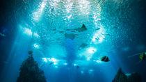 関東でクーポン情報のある水族館で家族のお出かけを楽しもう