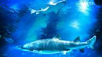 子どもとのおでかけにおすすめの四国でお正月も営業している水族館!