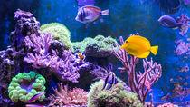 関東の夜も楽しめる水族館。ナイトショーやナイトアクアリウムなど子連れで楽しもう