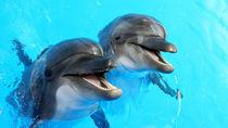 関東でお正月に営業している水族館。ママ目線で5つご紹介