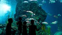 広島県周辺の展示を工夫している水族館で家族のお出かけを満喫しよう