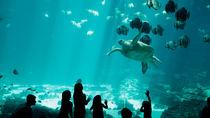 親子で楽しめる!九州で正月に営業している水族館について