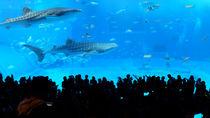九州でお正月に営業している水族館。子連れでおでかけを楽しもう