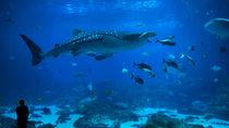広島県周辺の水族館。チケットの値段やクーポン情報を知って家族で出かけてみよう