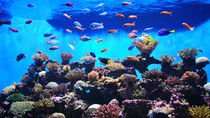 広島県周辺にある水族館の料金はいくら?施設ごとの料金やお得な情報を紹介