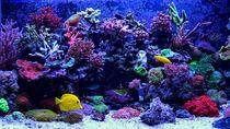 元旦に営業している九州の水族館。ショーやイベントを子どもと楽しもう