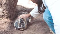 子どもと行きたい、北海道でふれあい体験ができる動物園