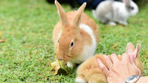 北海道で動物に触れることができる動物園へ家族でおでかけしよう