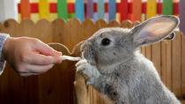 子どもと楽しめる!北海道で動物への餌やりプログラムがある動物園