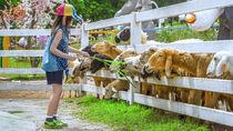大阪のかわいい動物や大きな動物に餌やり体験ができる動物園