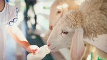 大阪で生き物に触れるプログラムがある動物園へ家族でおでかけしよう