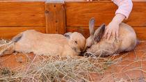 大阪の体験プログラムがある動物園をご紹介で生き物とのふれあいを楽しもう