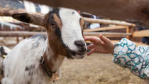 東京の動物園で生き物に触れる体験。ママ目線で選んだ子連れにおすすめのスポット