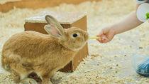 神奈川県周辺の動物園でえさやり体験。子どもといっしょに動物たちを間近で見てみよう