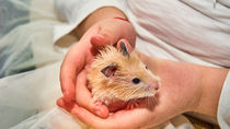 神奈川県でふれあい体験ができる動物園。子どもと一緒に動物とふれ合おう