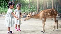 都内の動物園の無料開放日はいつ?親子でいっしょに動物に会いに行こう