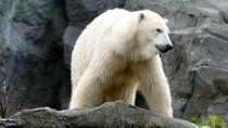北海道のいろいろな種類の生き物がいる動物園に、親子でおでかけ