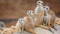 神奈川で子どもとのお出かけにおすすめの動物園ランキング
